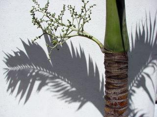 Found palm frond